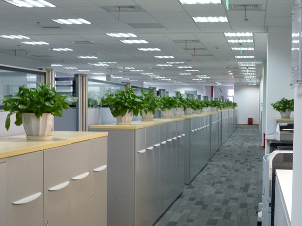 办公室绿植如何布置