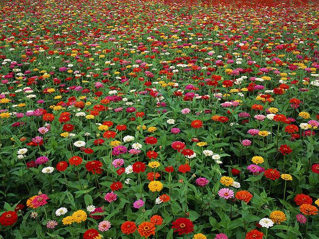 成都花卉出租